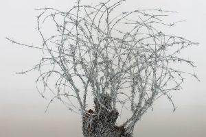 Abdul Rahman Katanani (Palestine) expose à la Galerie Magda Danysz (Paris)
